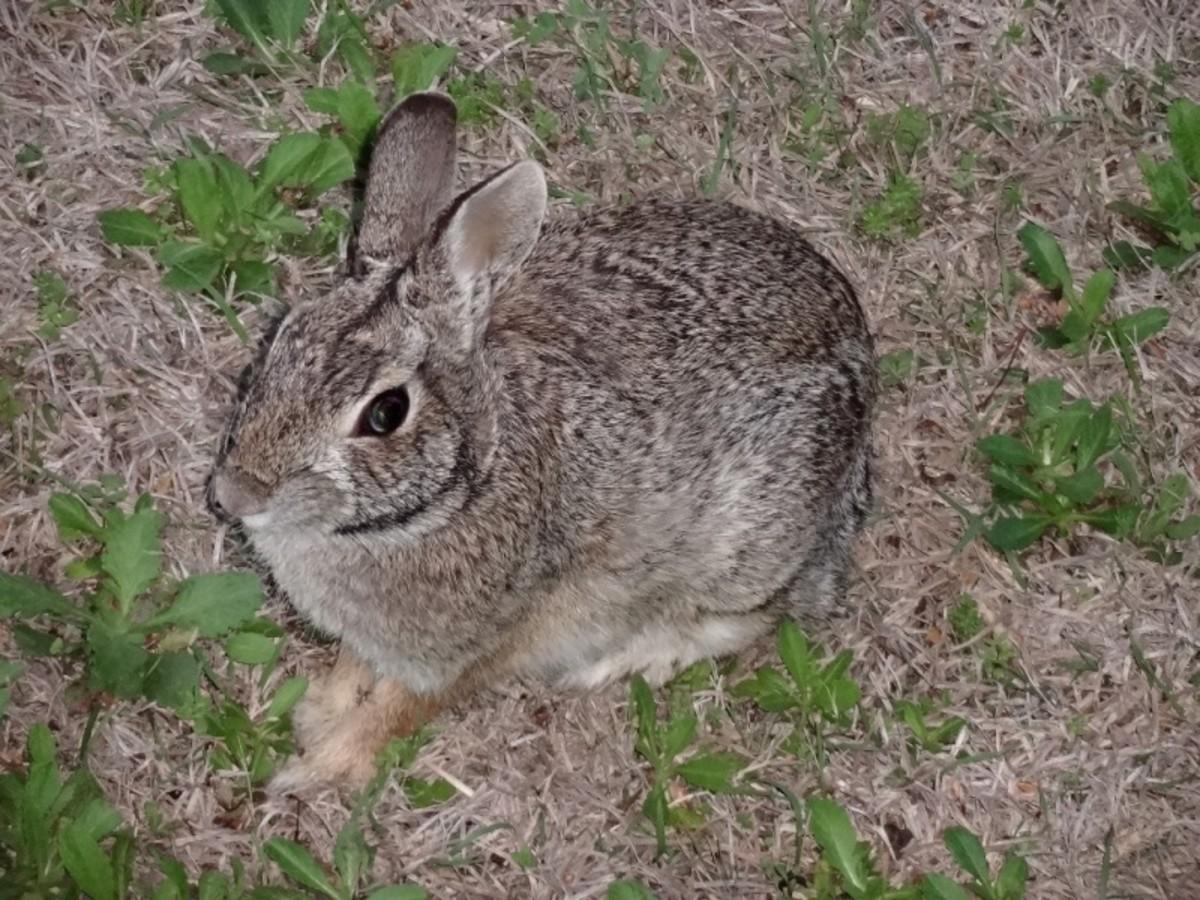 Run, rabbit, run.
