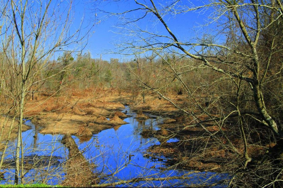A North Carolina swamp in winter.