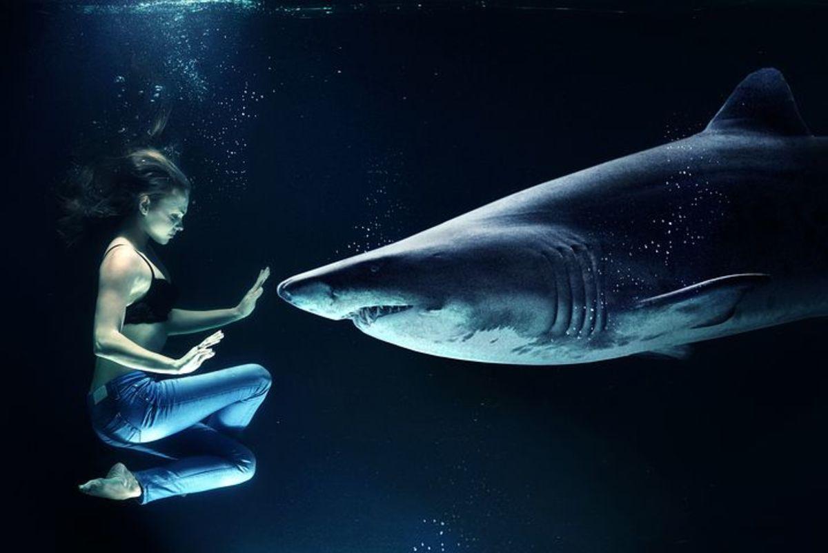 Don t swim with the sharks song lyrics letterpile for Swimming swimming in the swimming pool song lyrics