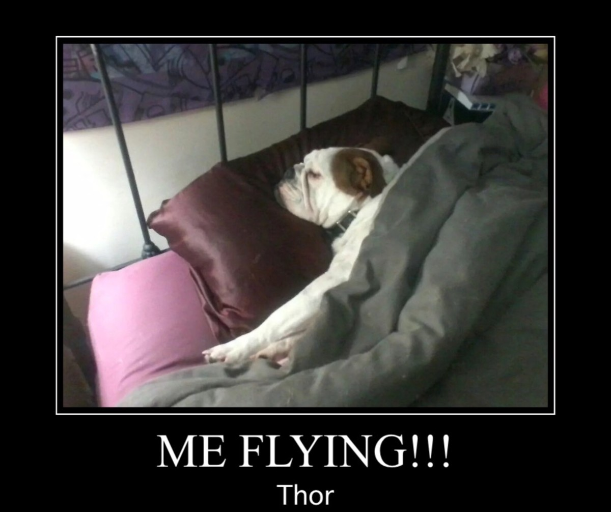 Sleeping Bully, Thor