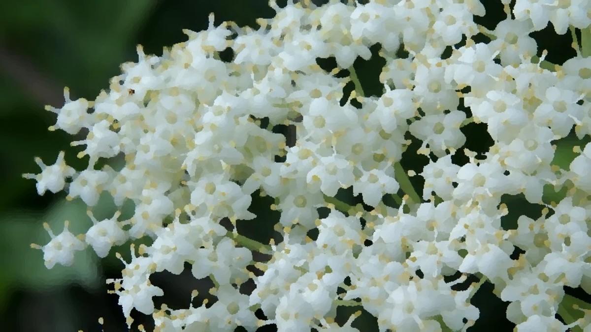 Jasmin. A most beguiling fragrance.