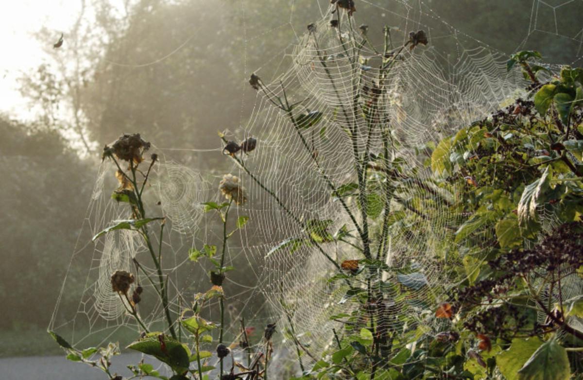 Autumn spider webs
