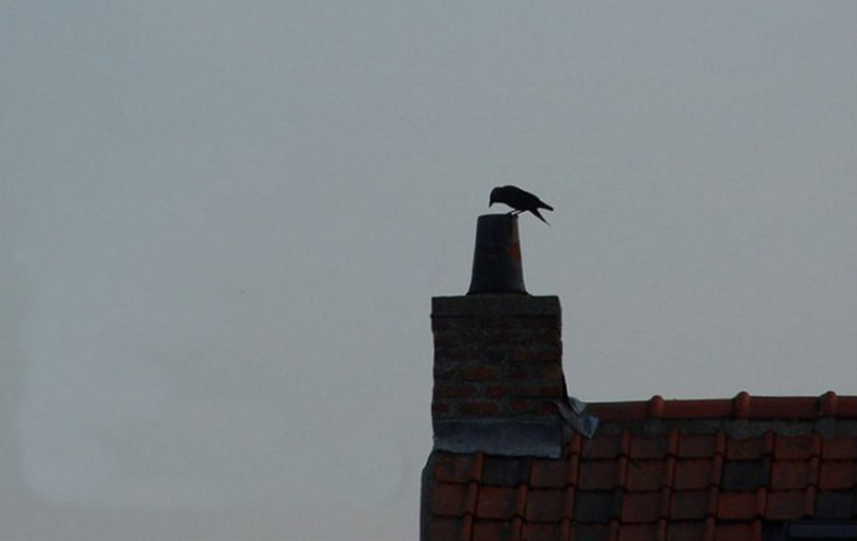 Crow's nest in the chimney
