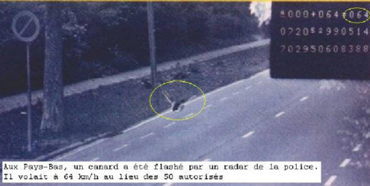 Speeding Duck flashed by radar