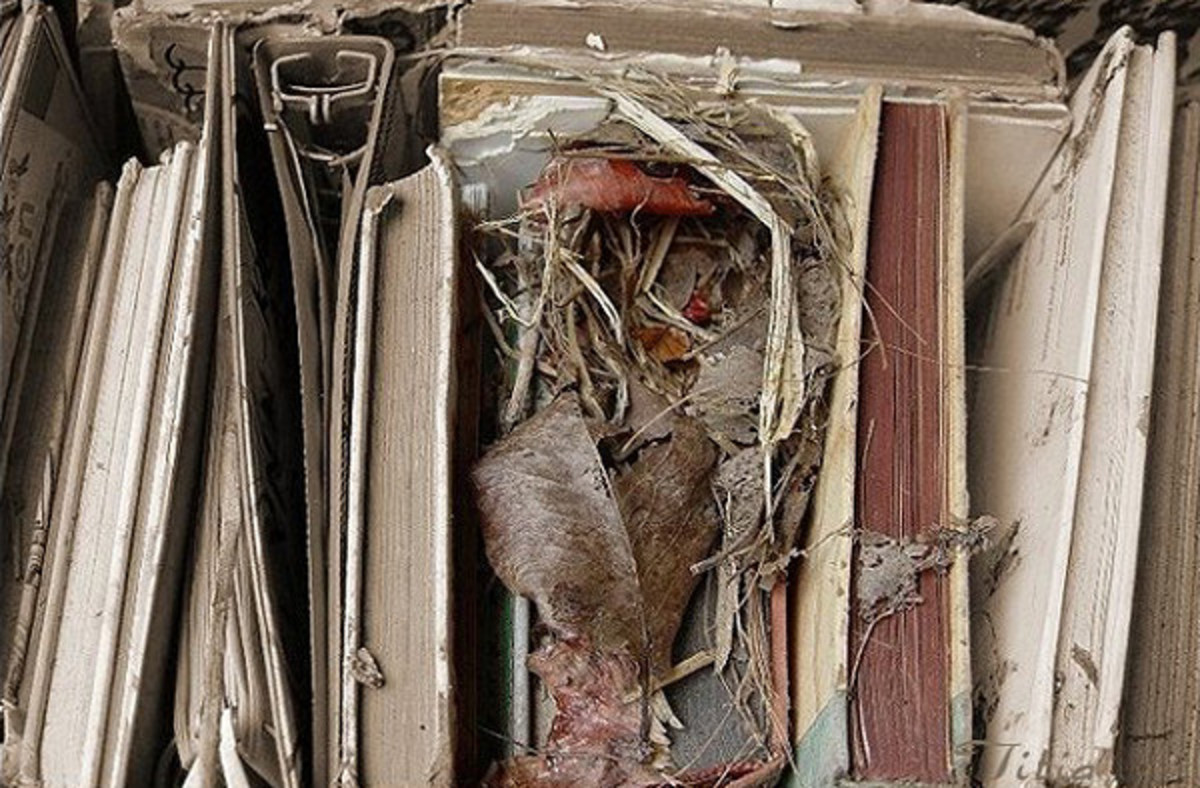 Mouse nest in a box of books