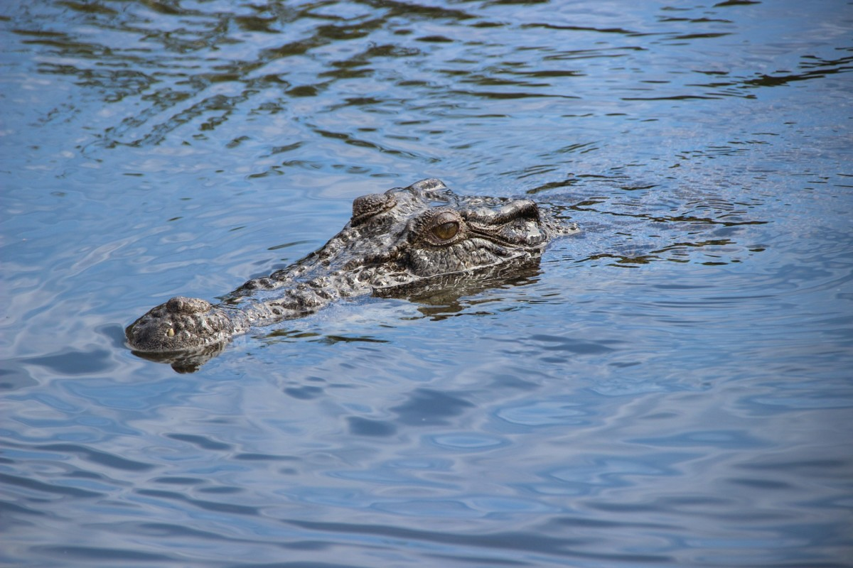He saw the first of the waterborne reptiles barely ten feet away