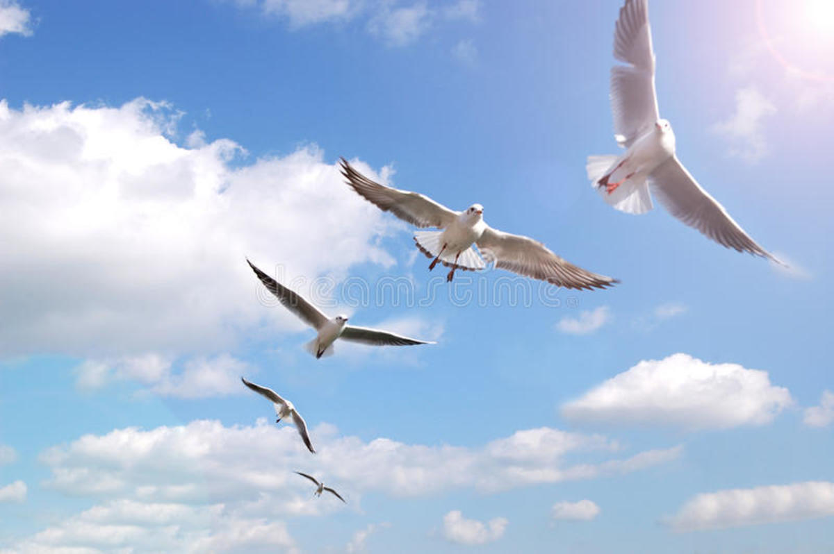 The first heaven is where the birds and airplanes fly.