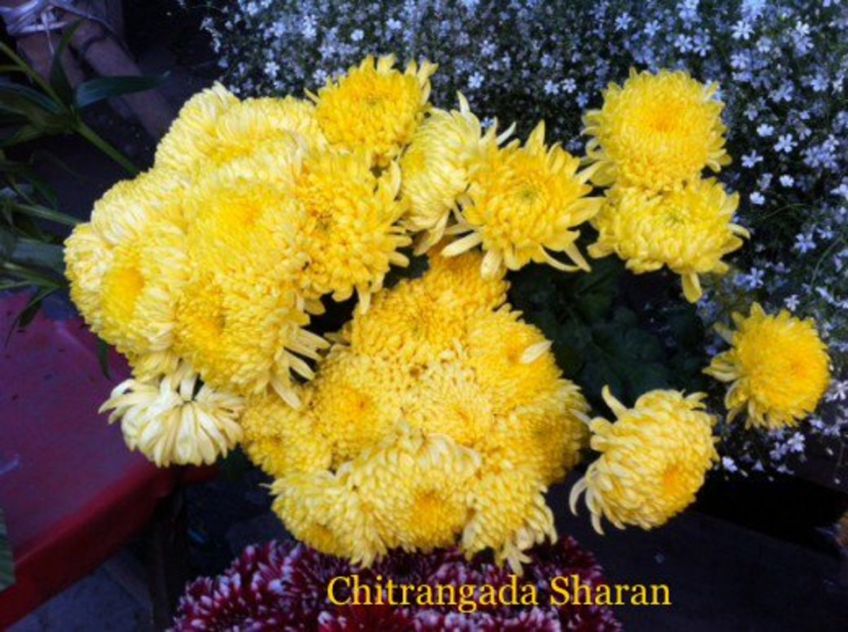 Yellow colour signifies joy, Sunshine and positive energy—A bunch of yellow flowers
