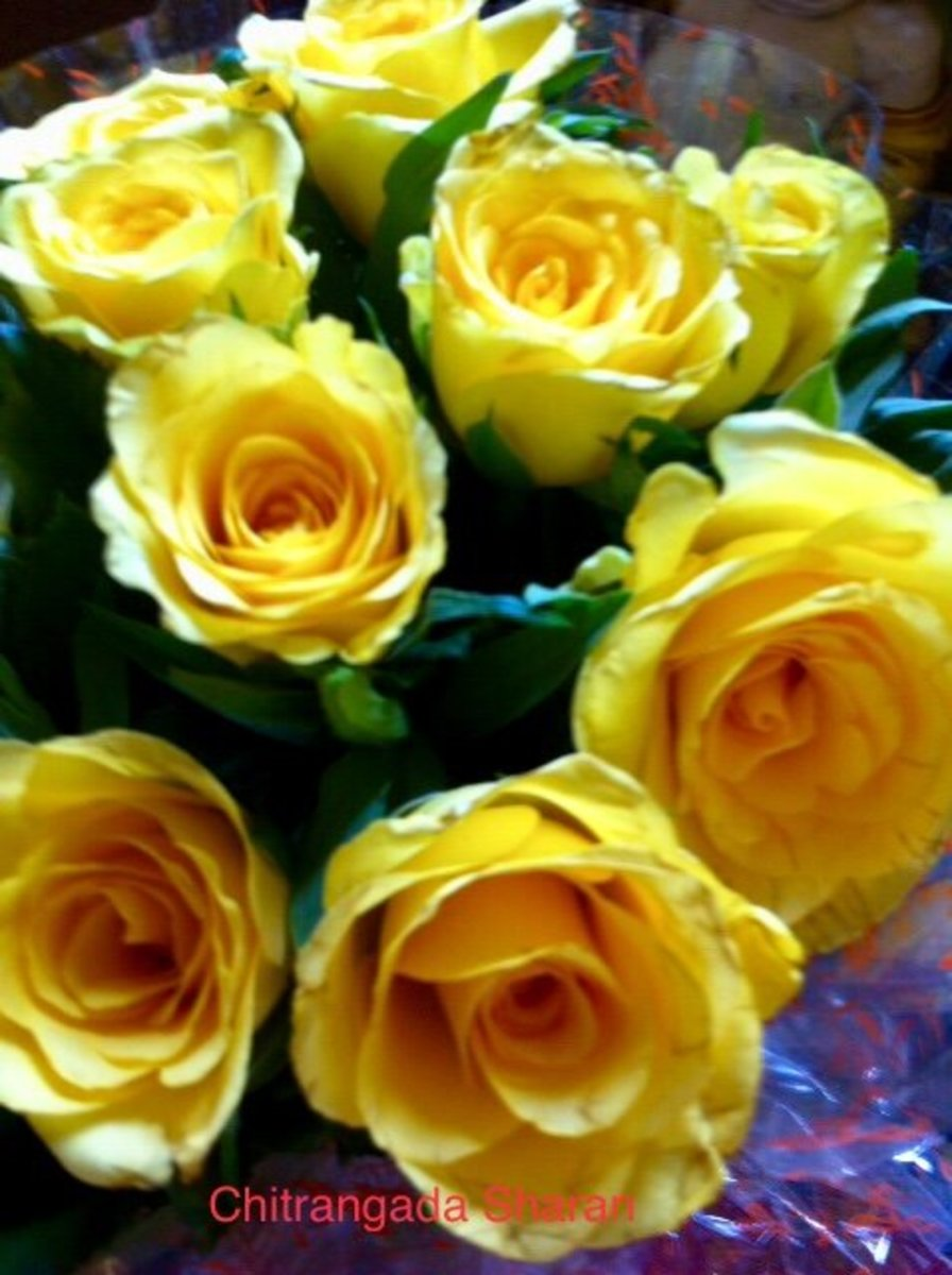 The yellow for brightening the day—A bunch of yellow Roses