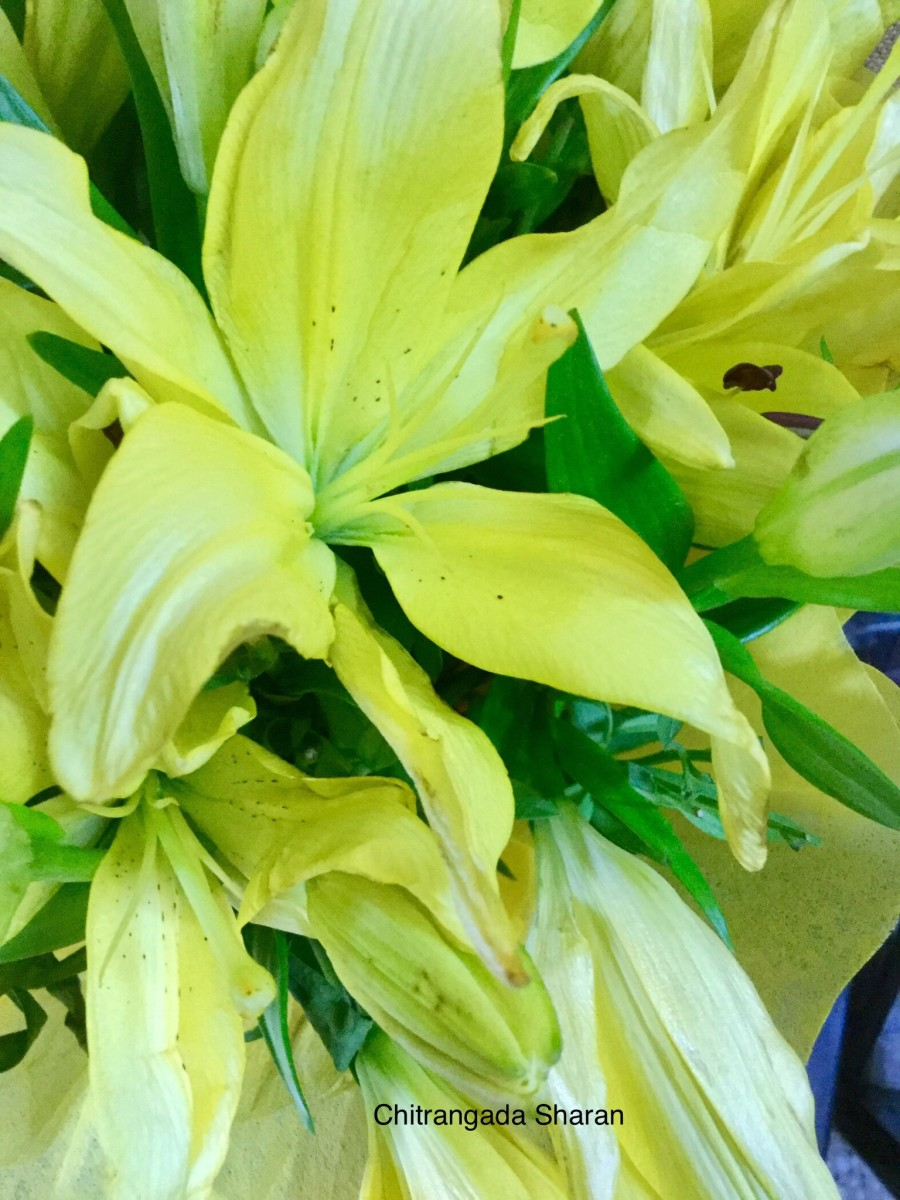The colour yellow has so many variations—Light Yellow Lilies flowers