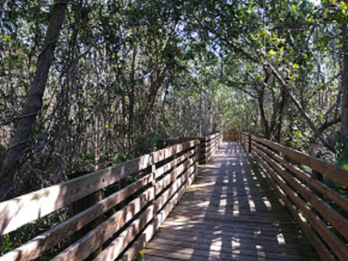 Peck Lake Park, Hobe Sound, Florida