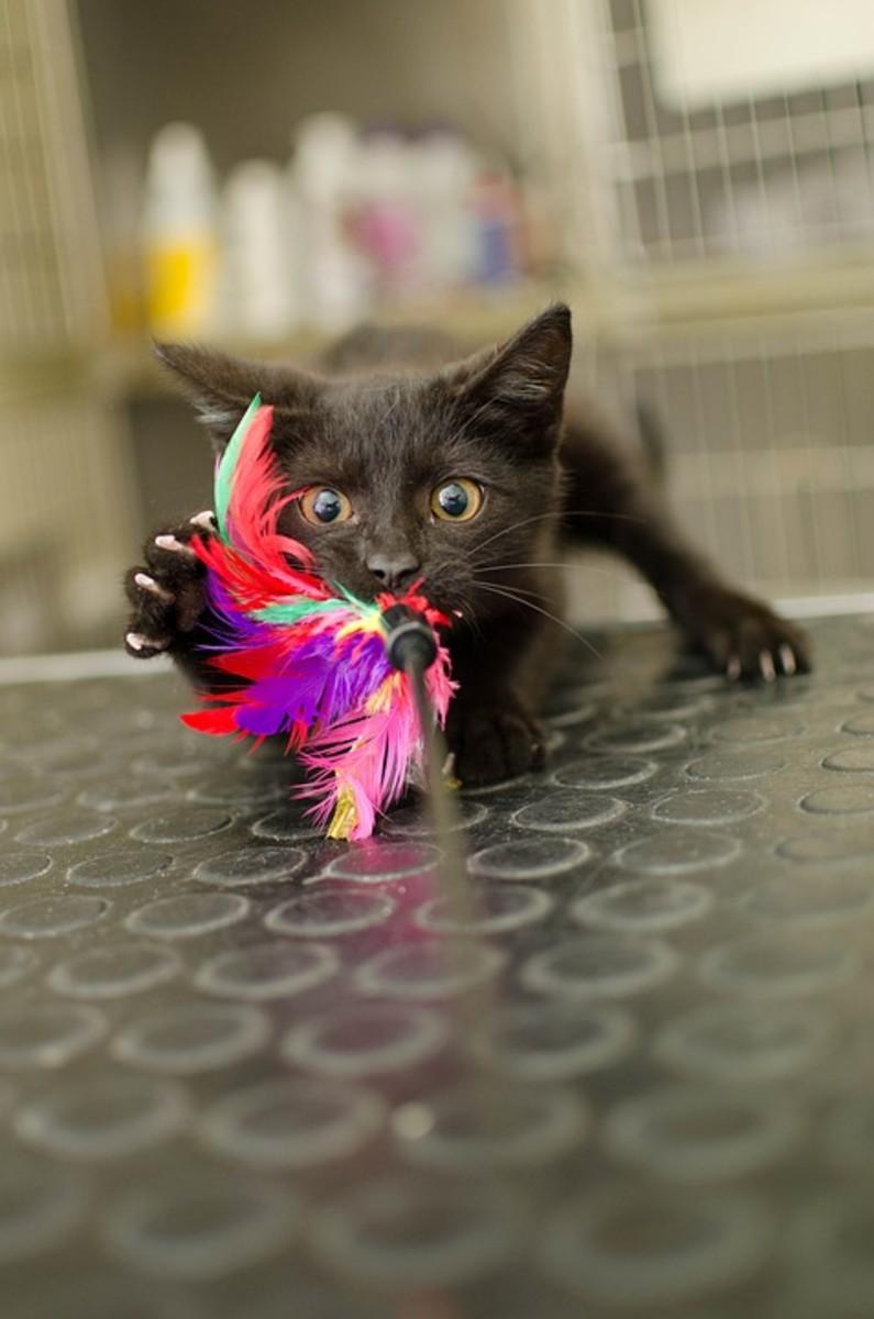 A black kitten at the vet.