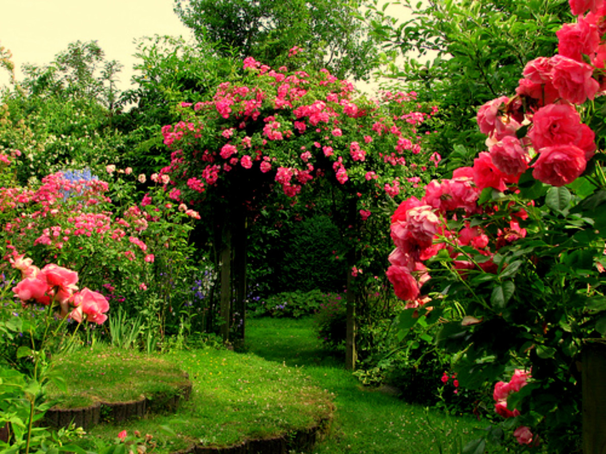 Garden full of Roses | Source