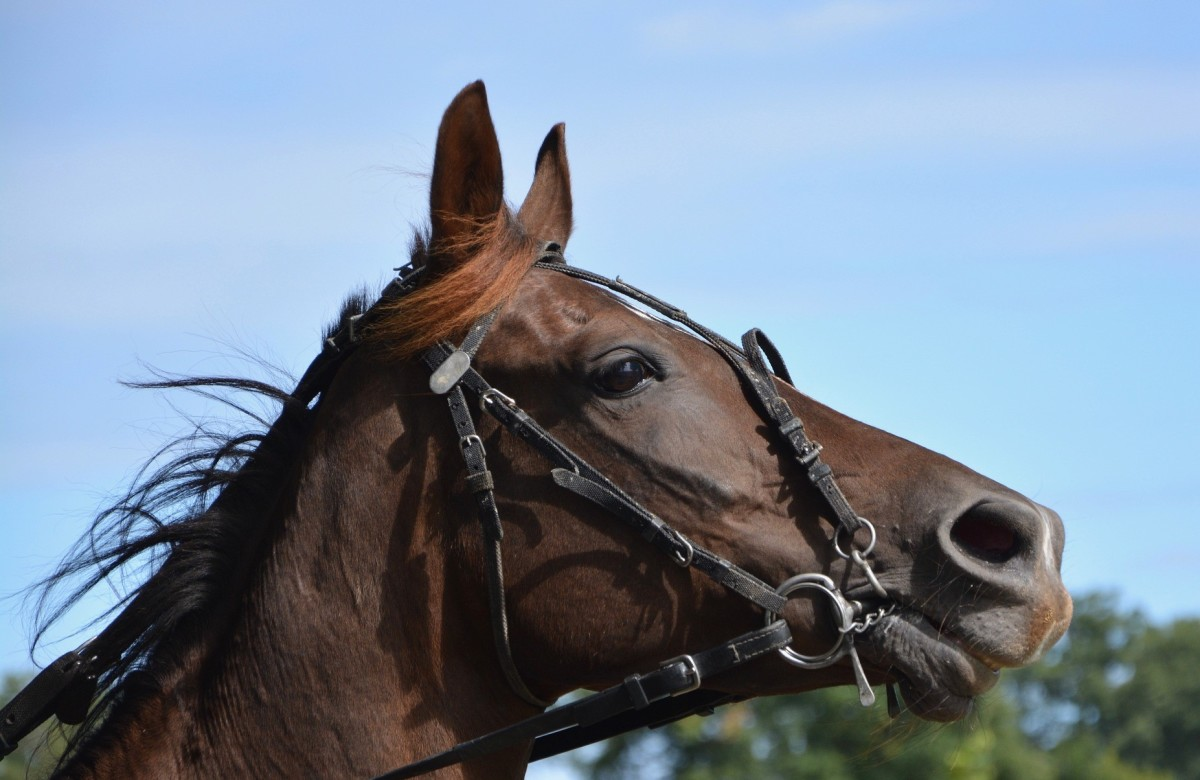 He drew back on his reins and quickly dismounted from his horse.