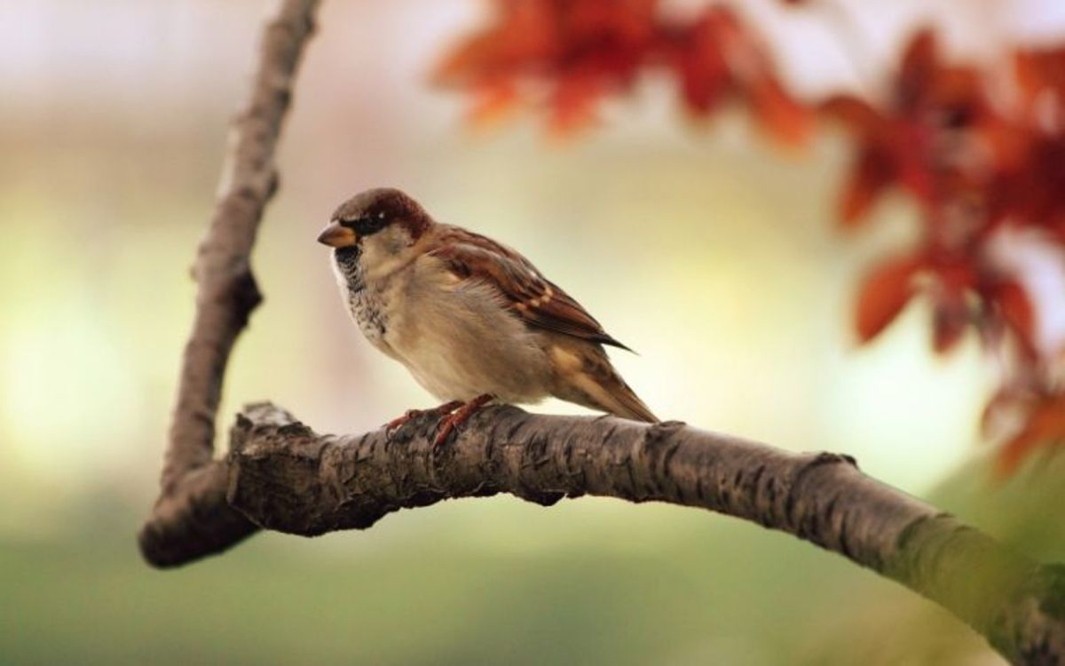 God cares for little things like the little sparrow He made.