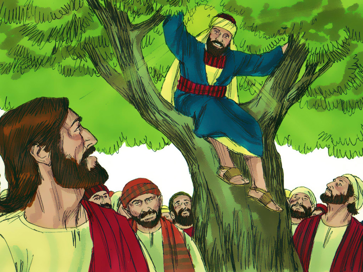 Zacchaeus was a small man who climbed a sycamore tree to see Jesus and to hear Him speak.