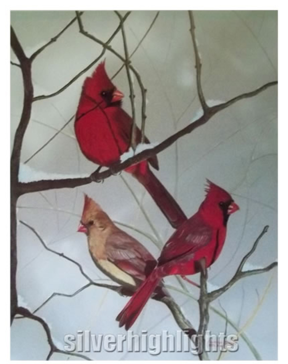 Cardinals Colored Pencil