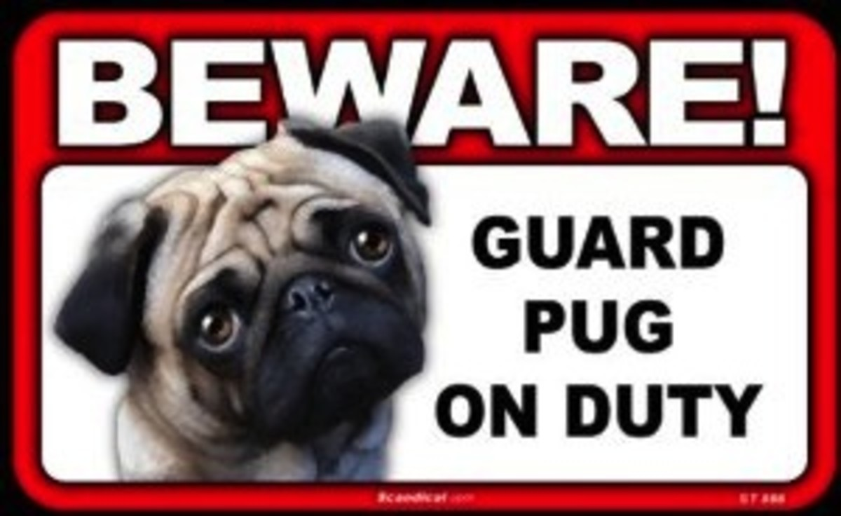 the-might-guard-dog-the-pug