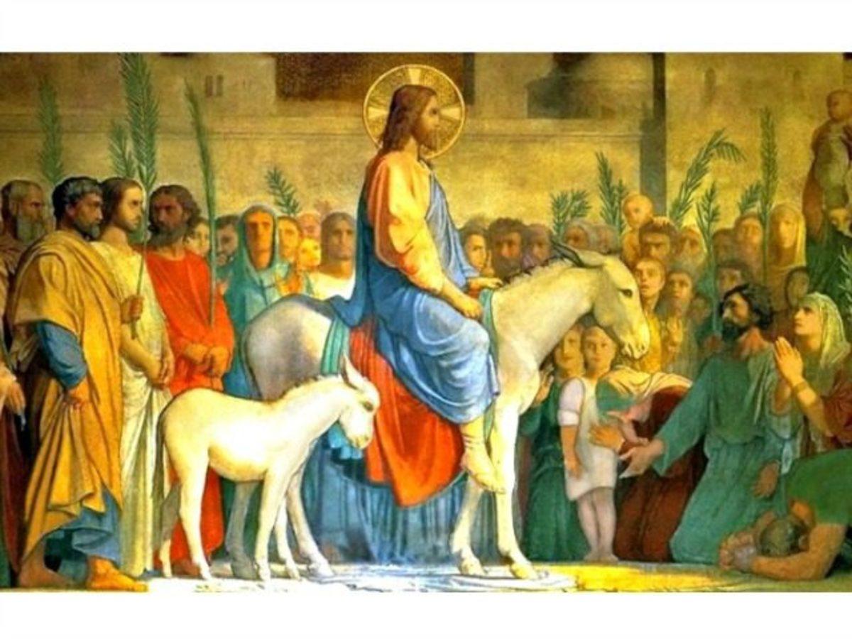 Jesus rode into Jerusalem on a new colt on Palm Sunday.