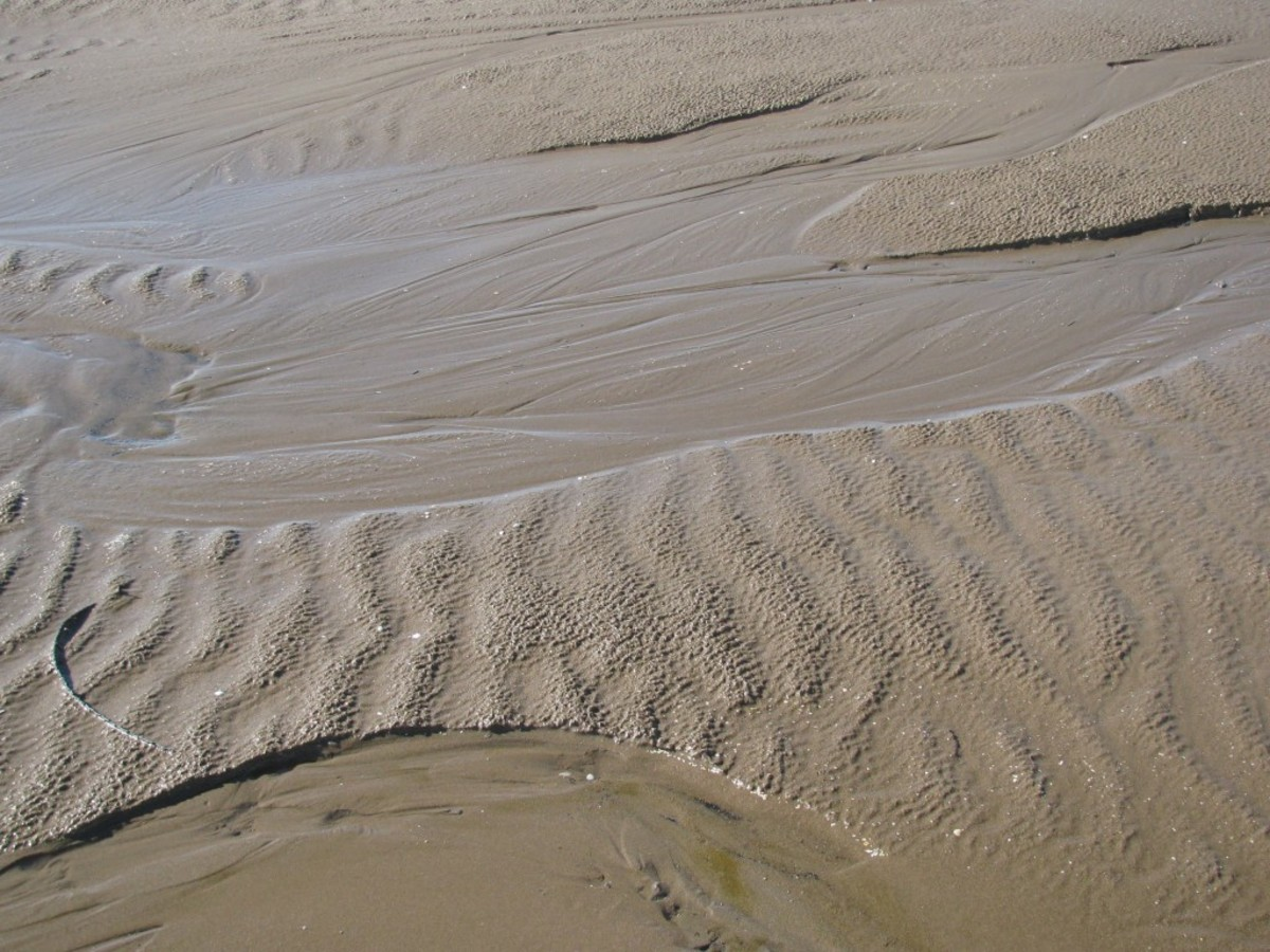 Paths in the Sand