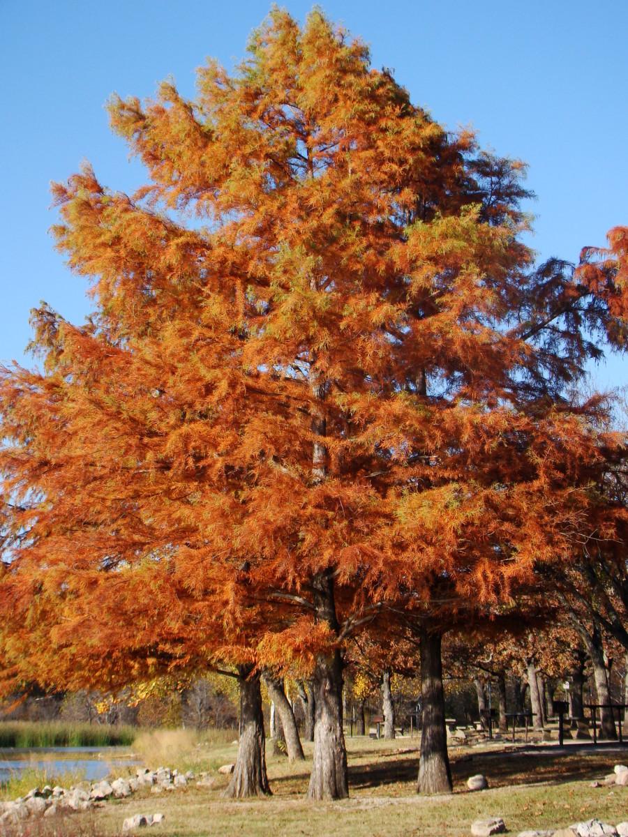 Fall Colors, Heyburn Park, Kellyville, Oklahoma