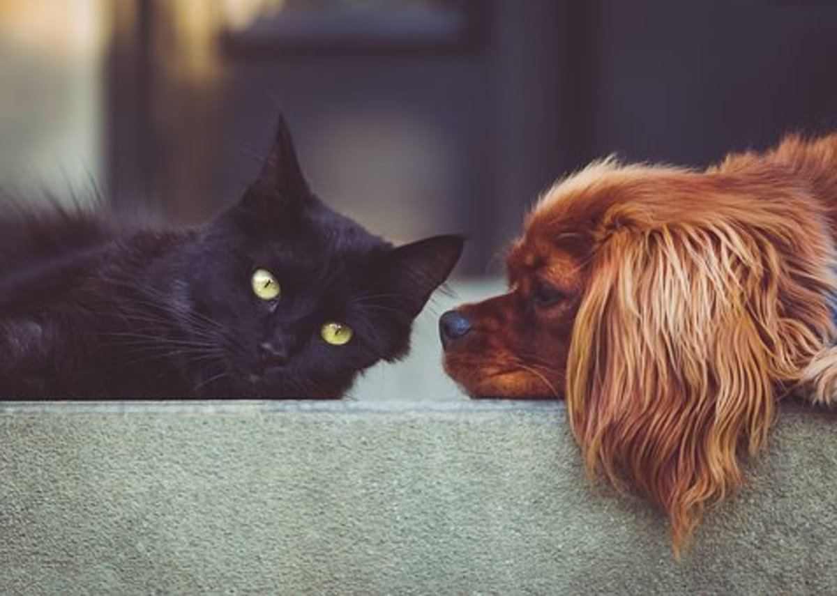love-goes-on-five-stories-of-pets-who-comforted-their-owners-from-the-afterlife