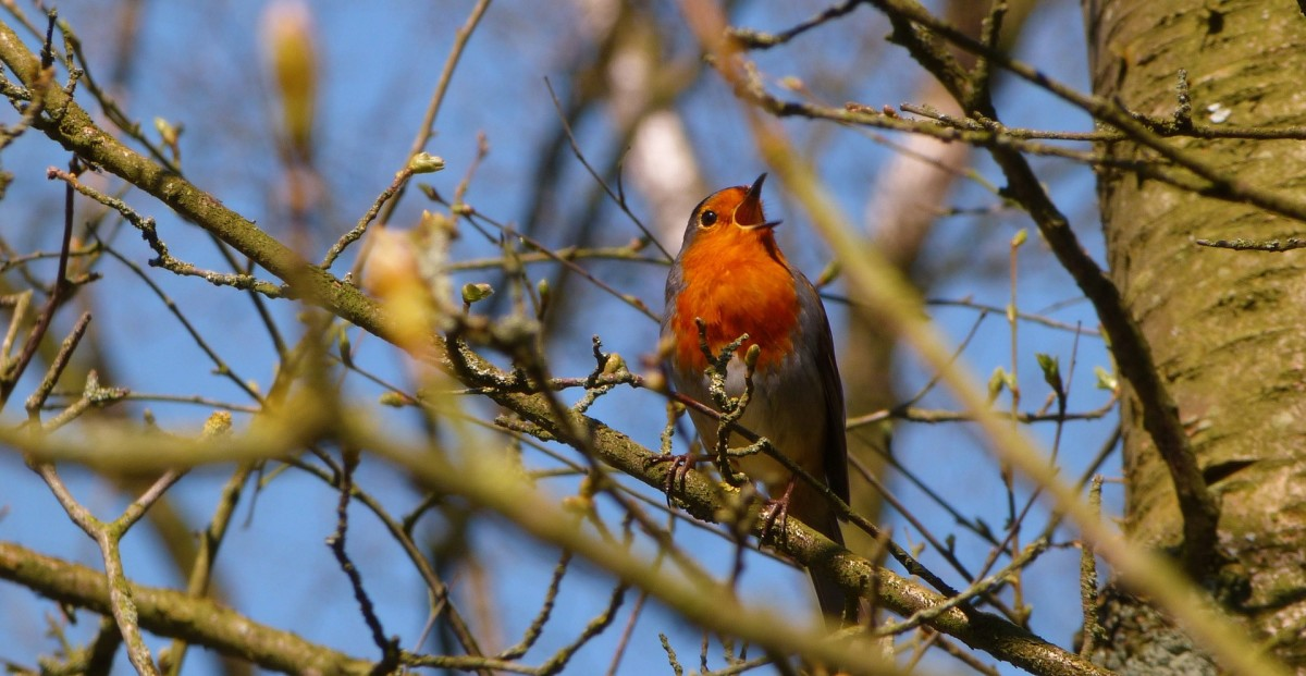 the-birds-began-to-sing-flash-fiction