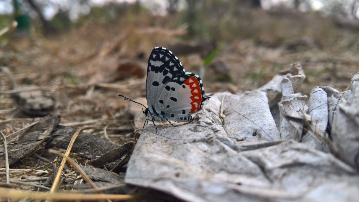 A beautiful personality is similar to a butterfly. It brings about a sense of joy and colour to wherever it goes.