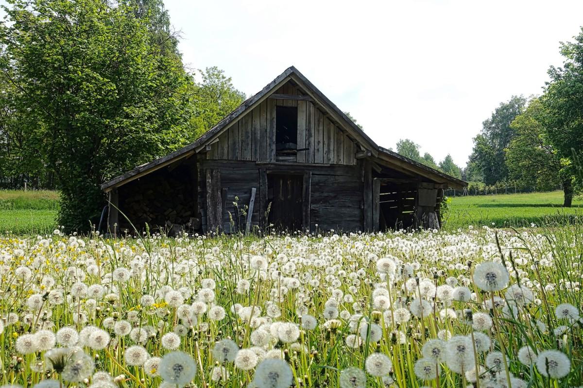 Papa Martin's Barn