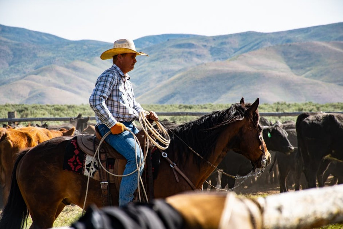 Cattle drovers make great employees who love to work alone, but hate the crowds.