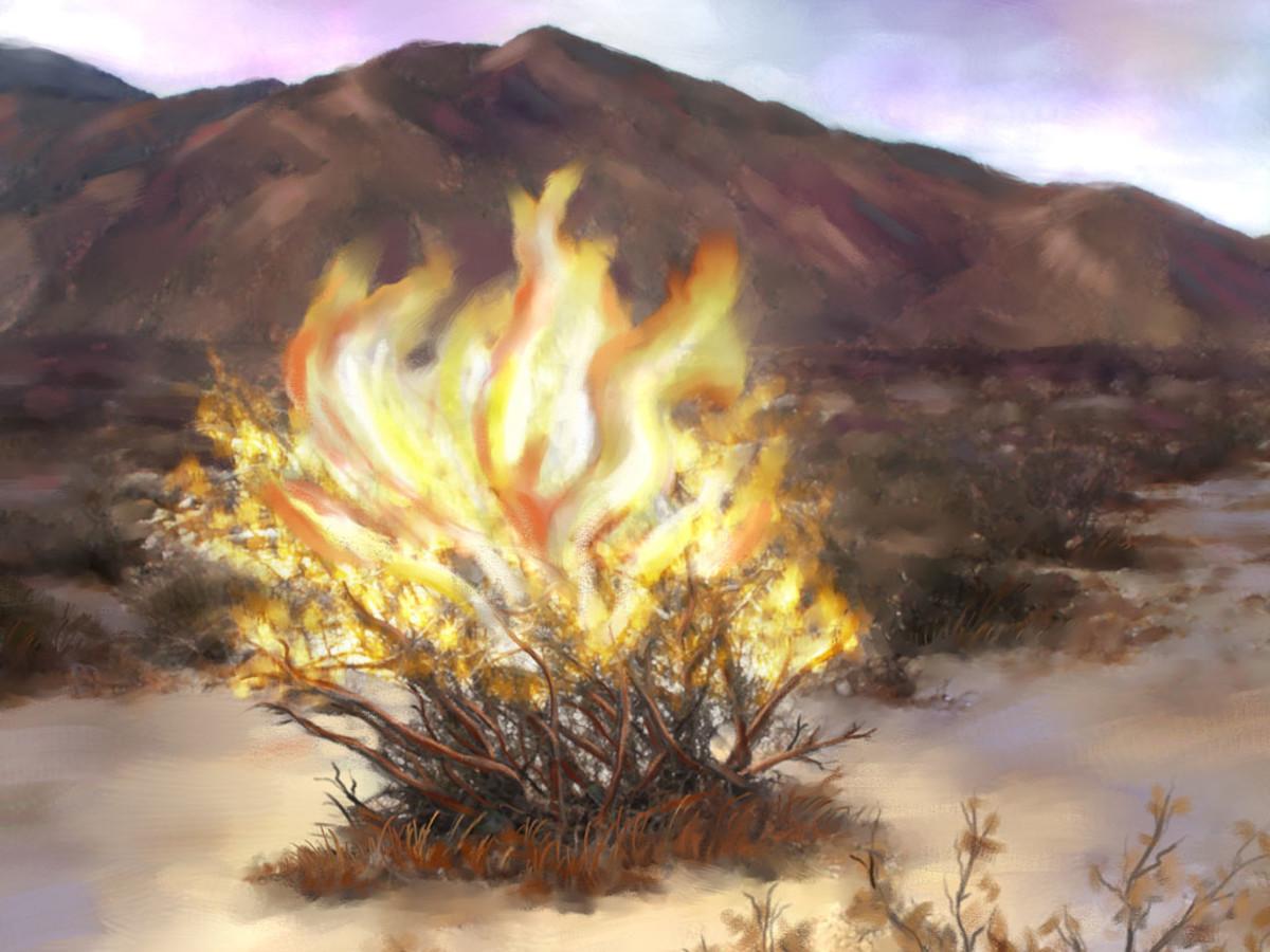 The Burning Bush where God spoke through to Moses