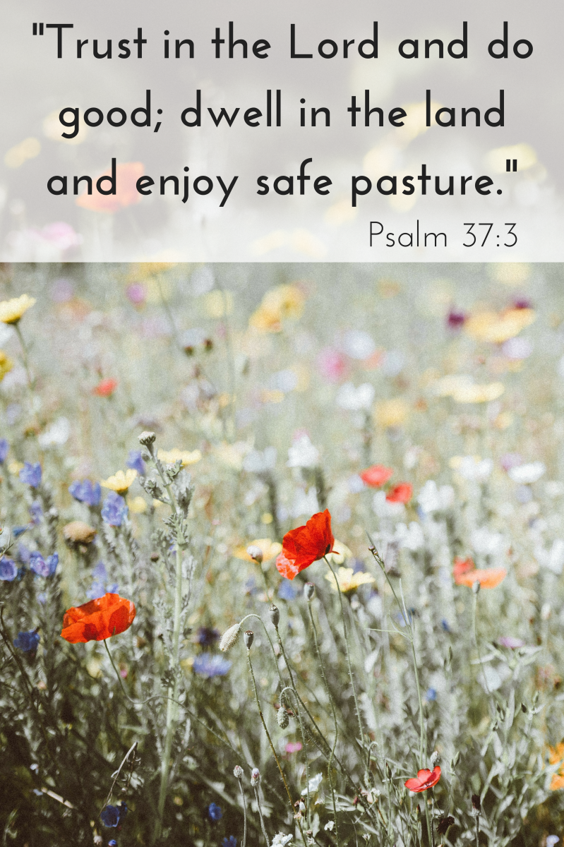 Psalm. 37:3