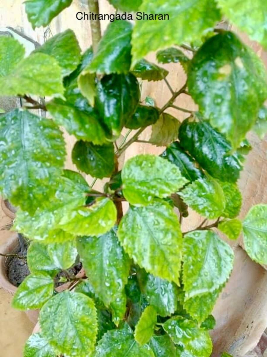 The tiny raindrops on the plants