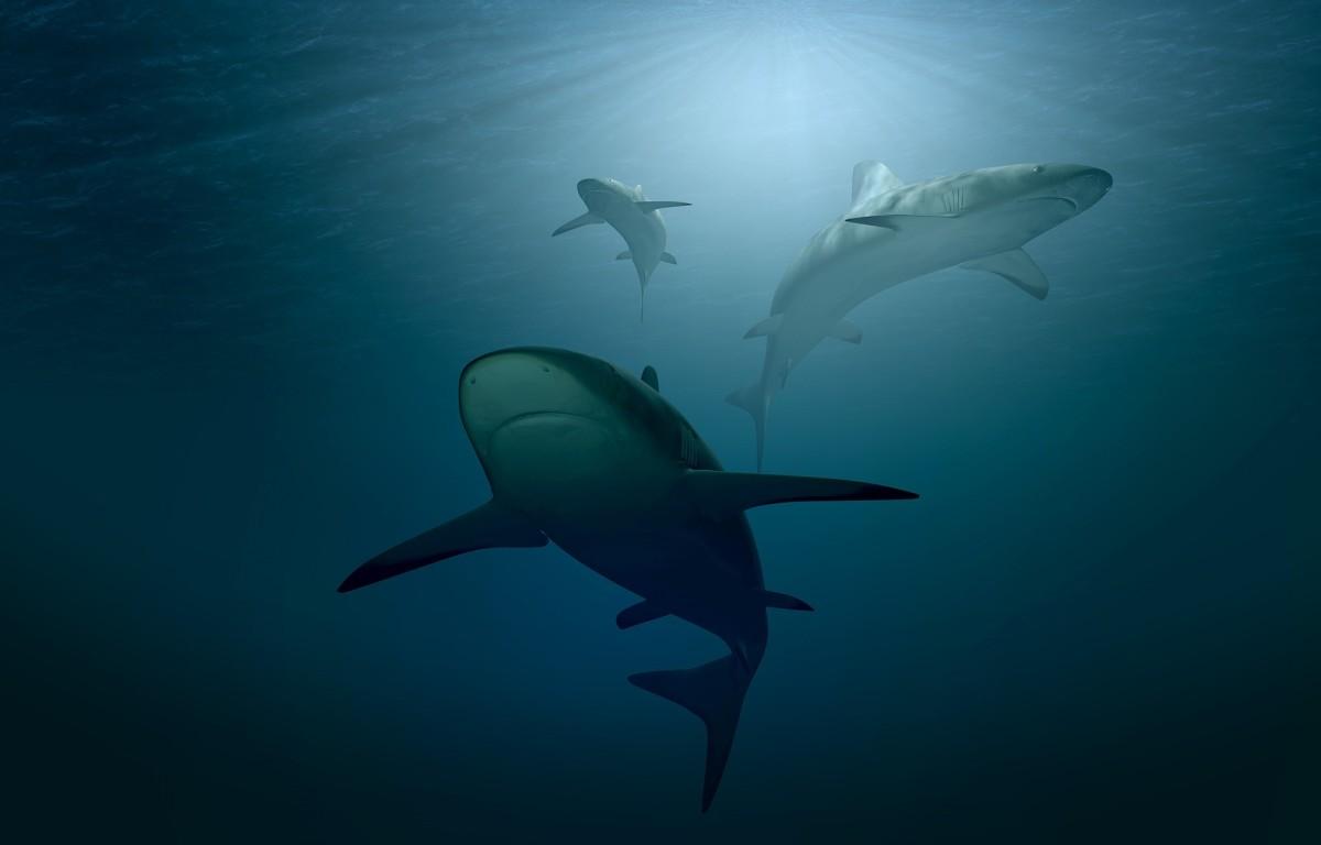 Sharks circling