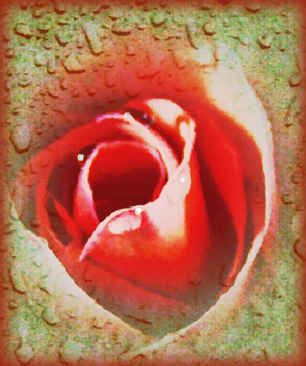abiding-love-encircling-peace