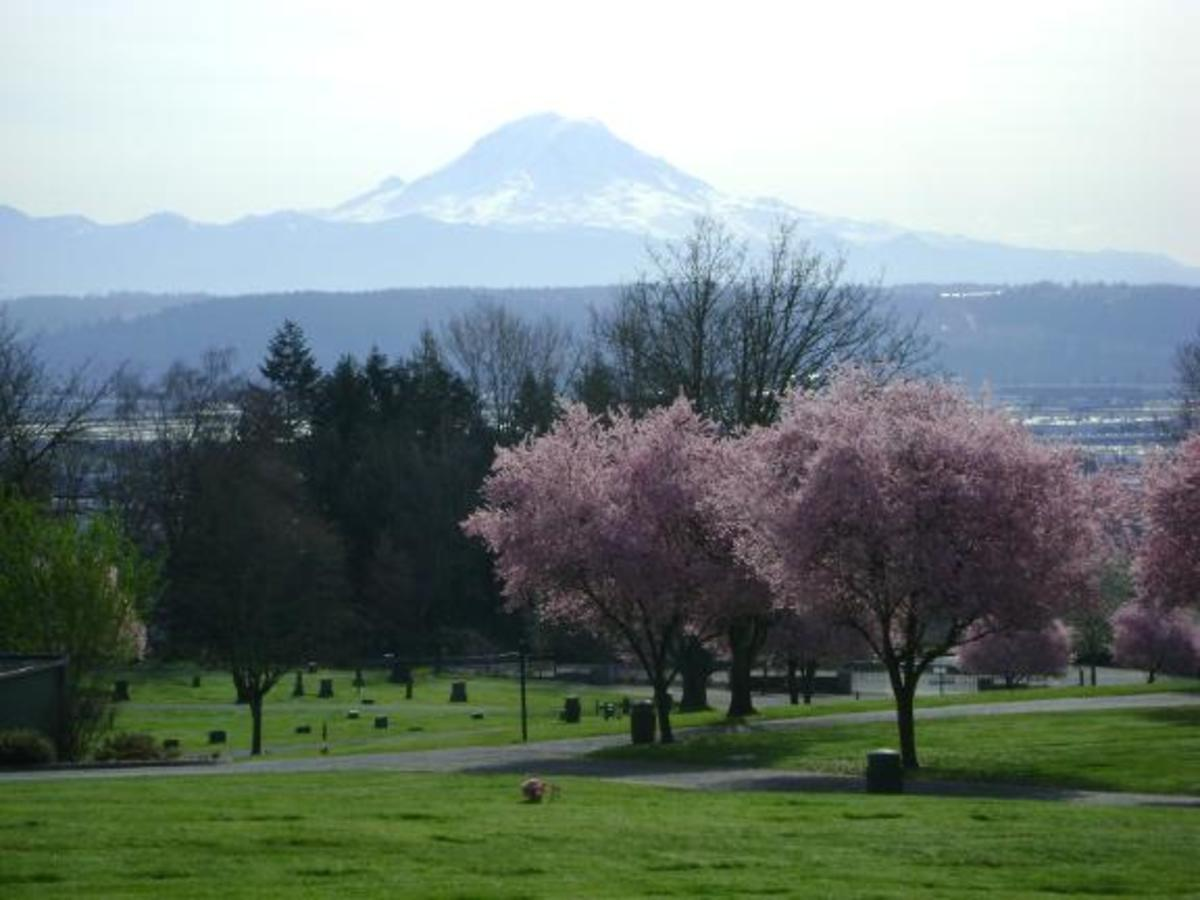 ... soft pink blossoms graced the spring cherry trees. Mount Rainier stood as a breathtaking monument filling the western skies of the Puget Sound region.