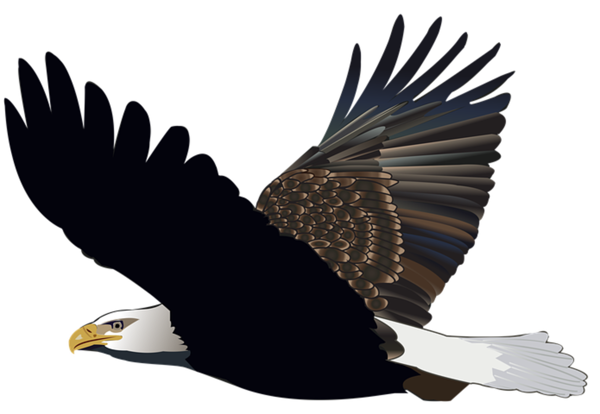 Eagle's Wings, Soldiers' Tribute, Song Lyrics