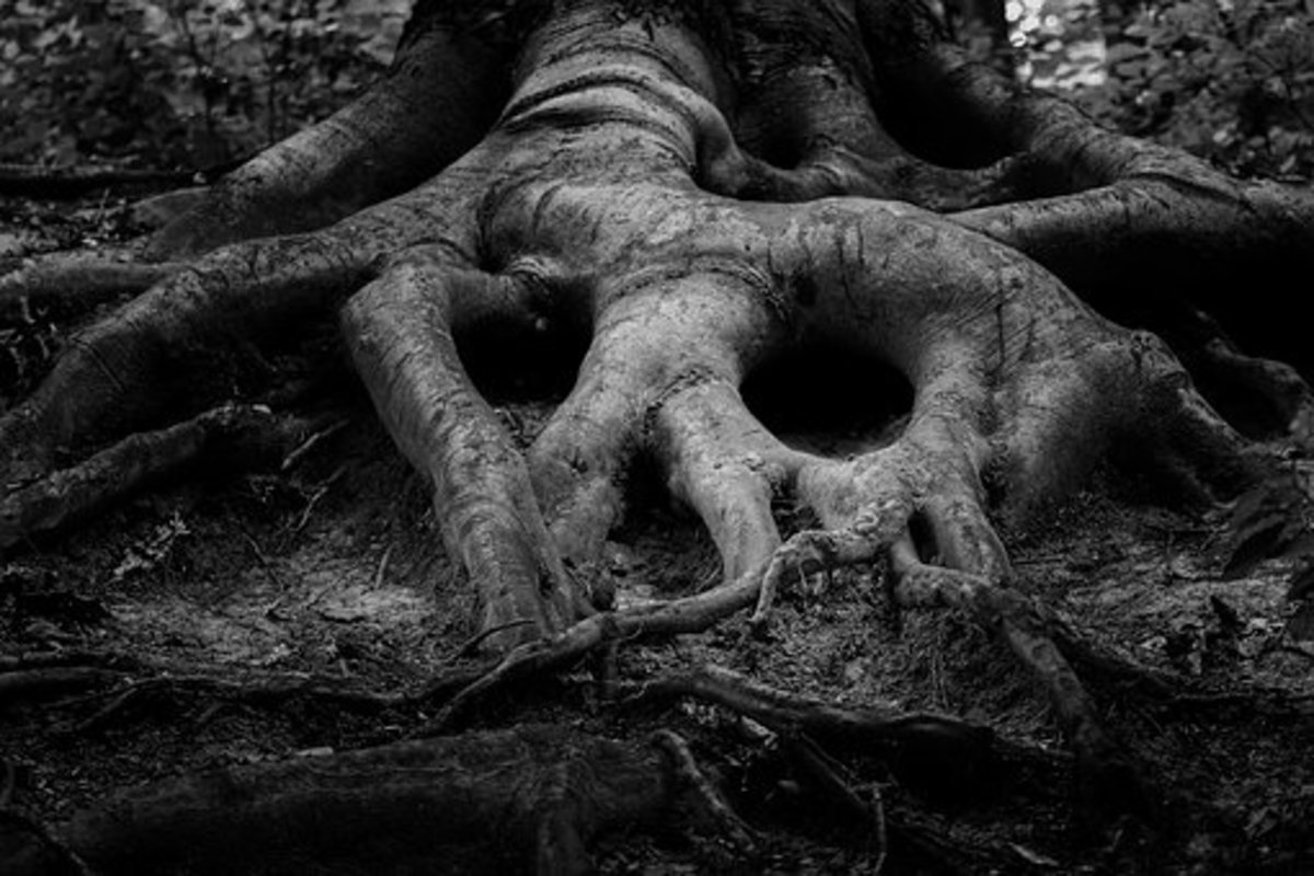 Eerie tree roots in the bottoms