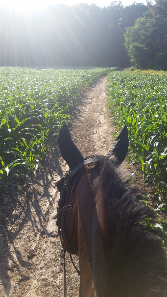 My old normal involved horses almost 99,9 % of the time! This was one of my favorite views.