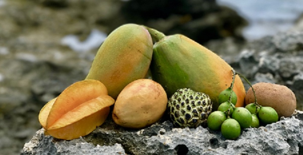 Front left to right: starfruit, guava, sugar apple, genips.  Back left to right: mango, papaya, sapodilla.  Photo Credit: Copyright © 2018 Plants and Healers International