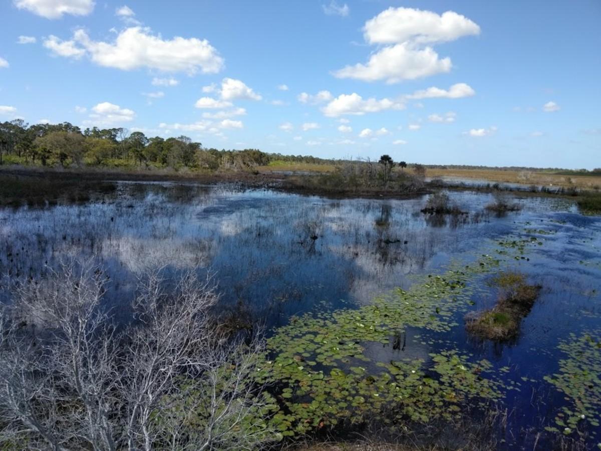 Indrio Savannahs' Preserve in Fort Pierce, Florida