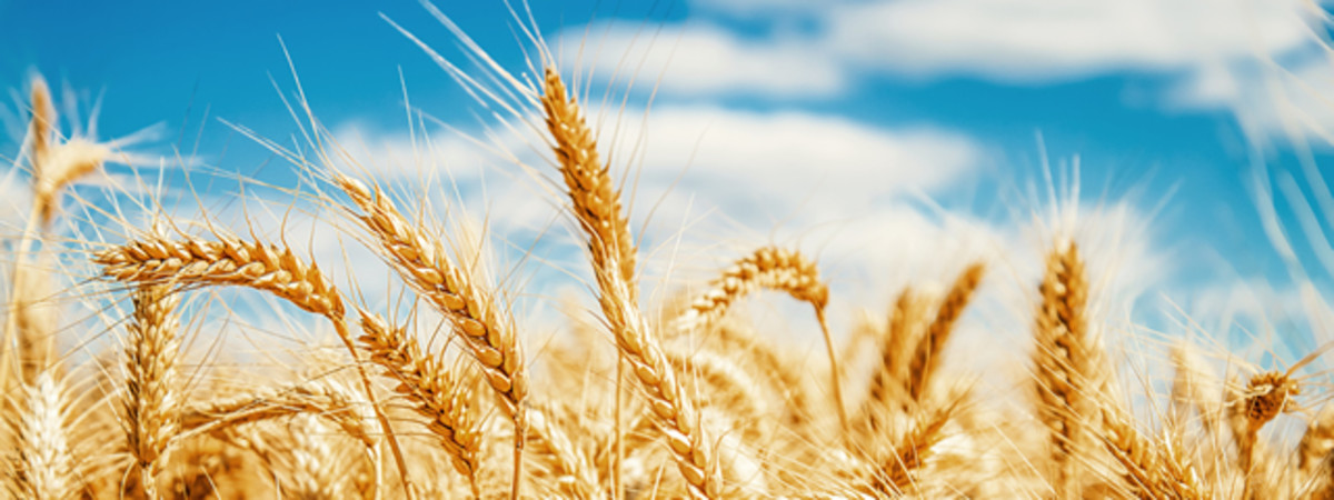 The wicked is compared to chaff that the wind blows away.