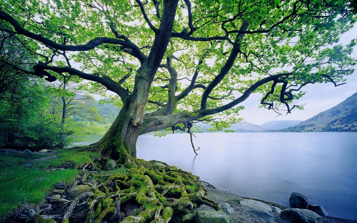 The righteous is compared to a tree planted by the rivers of water.