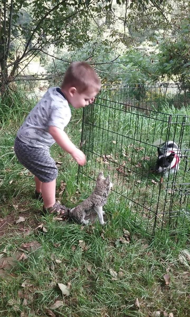 Dolly meets my grandson, Kaden.