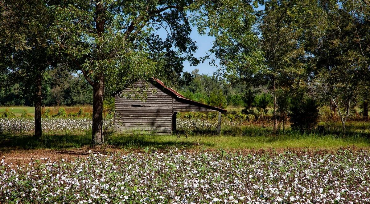 Cotton and small crib