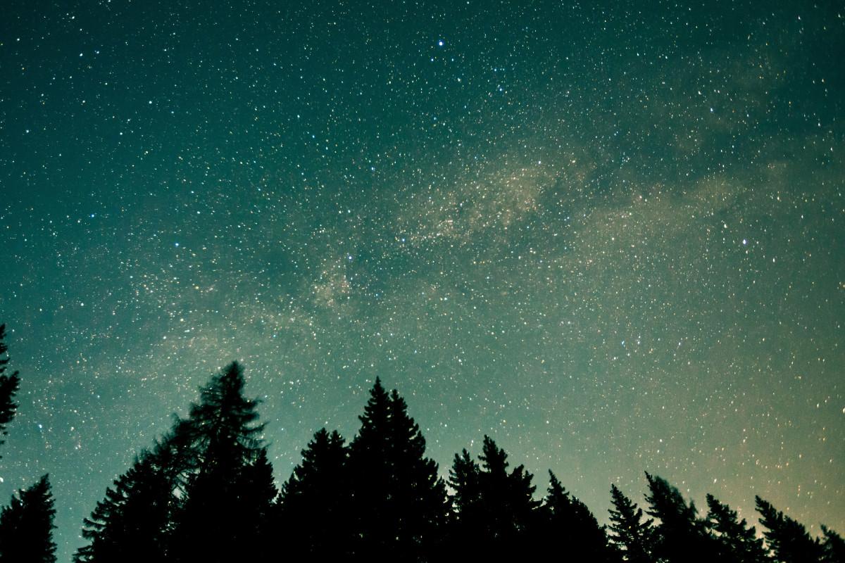 https://isorepublic.com/forest-stars/
