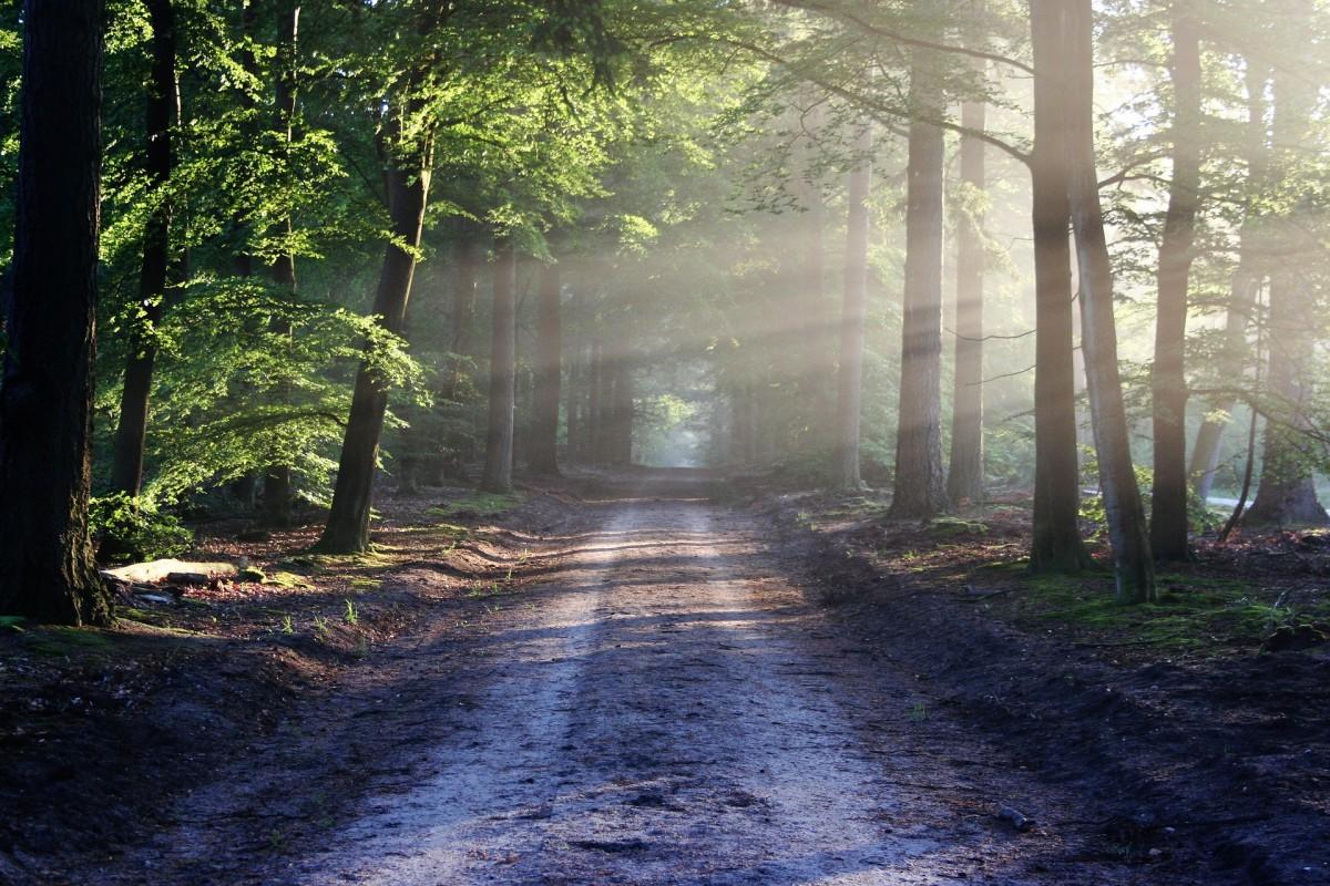 https://pixabay.com/en/landscape-road-815297_1920