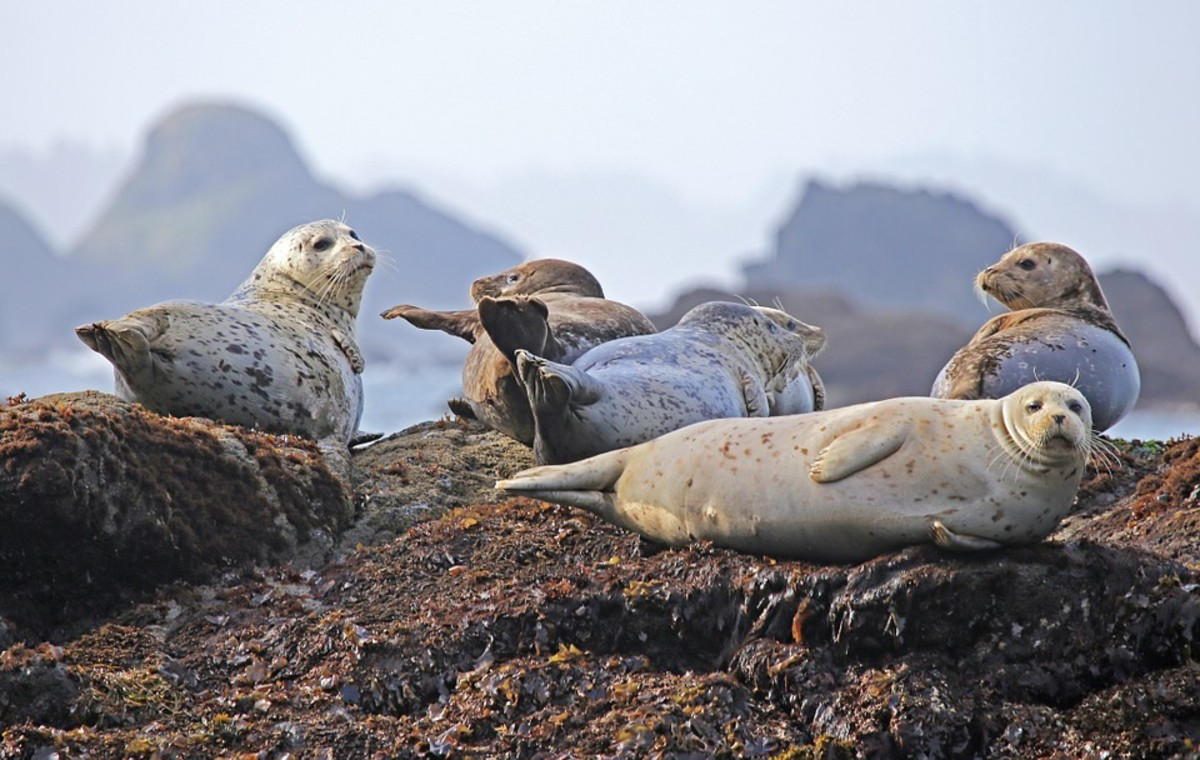 the-selkie-wife-a-short-story-inspired-by-celtic-folklore-chapter-5