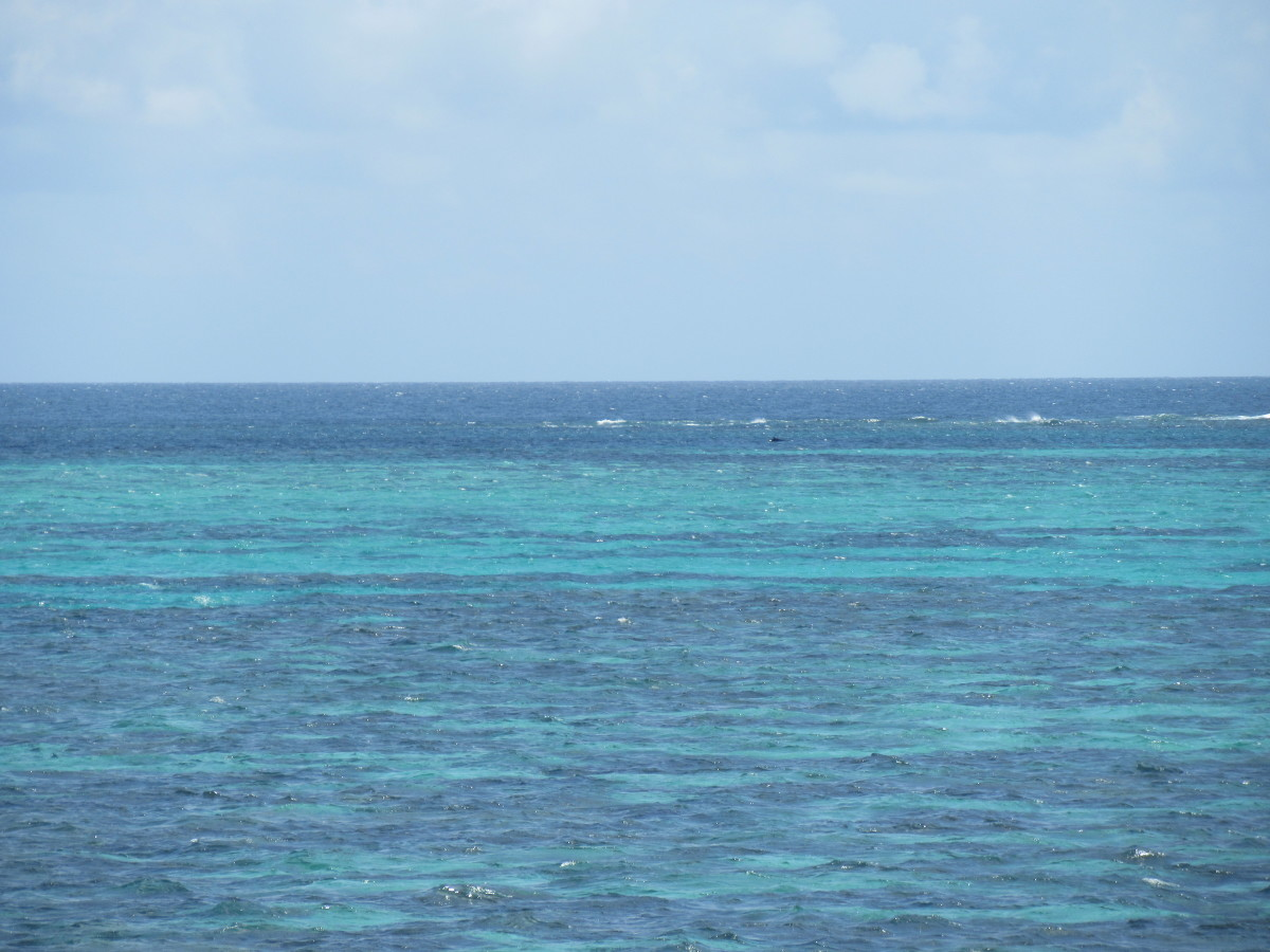 Colours above the Coral Reef