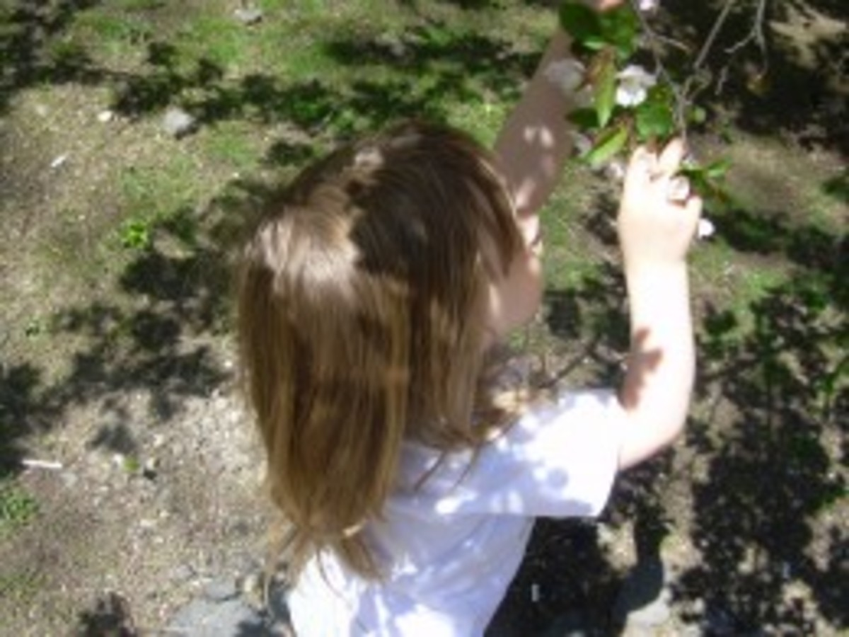 My daughter looking closely at flowers budding in Spring
